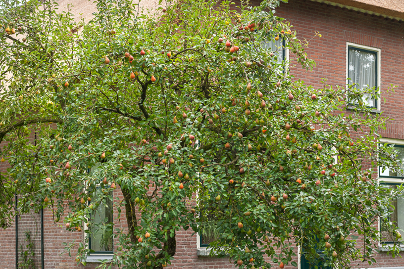 Wonderlijk Aantastingen bij fruitbomen | Landleven YK-37