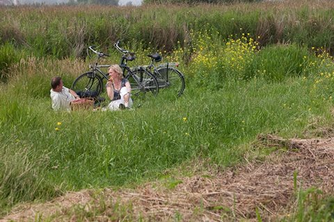 Picknicken in het gras