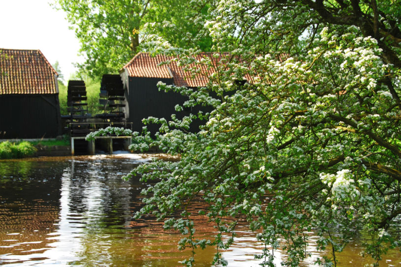 Watermolen langs de Dommel