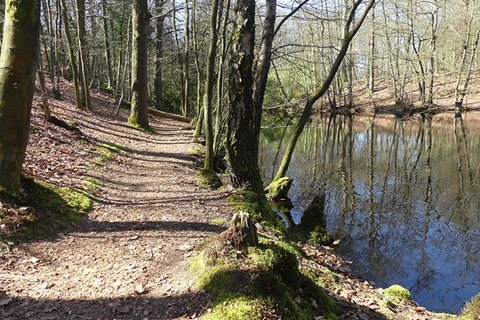 wandelpad door bos langs water