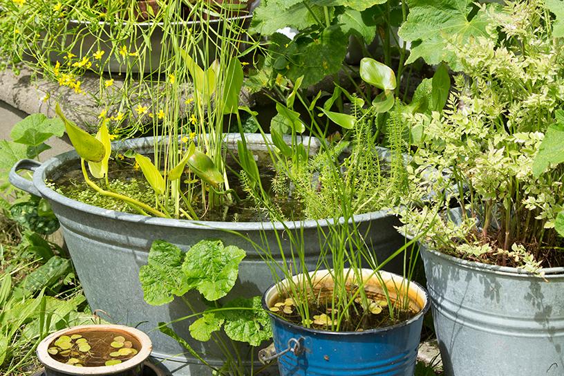 Zo maak je een vijverteiltje landleven for Waterpartij maken