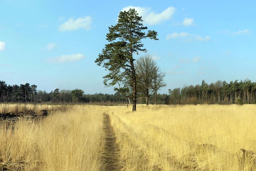 Wandeling Van De Maand Noord Brabant Landleven