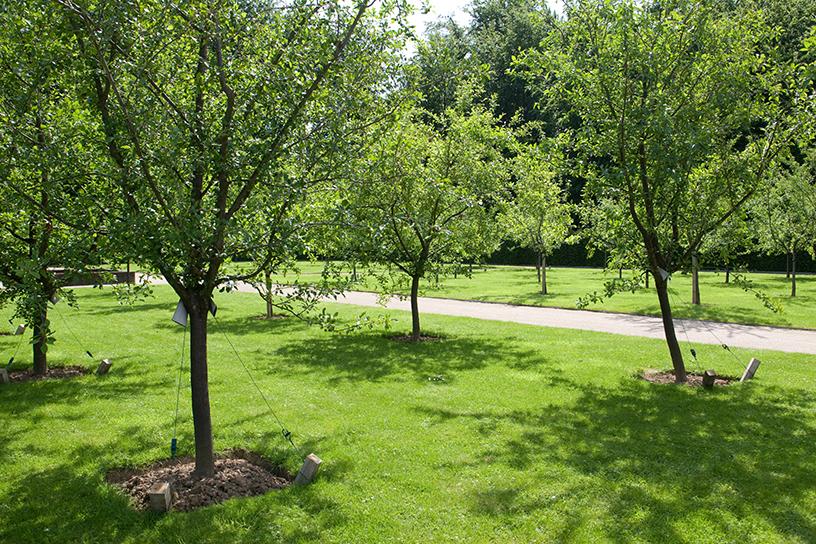 Populair 5 tips voor fruitbomen | Landleven &JR93